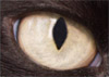 Cat's Eye - Original Size Thumbnail